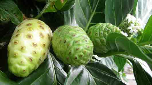 Какой плод окрестили «великой тайной» острова Таити