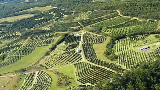«Стратегия» в сельском хозяйстве