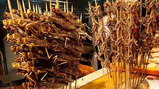 Какое насекомое в китайских поваренных книгах появилось 3000 лет назад