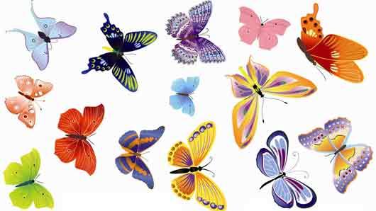 Бабочка из гардероба