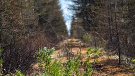 Дорожка в лесу для трубопровода