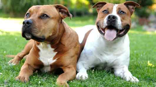 Ради чего породистых собак «друг с другом знакомят»