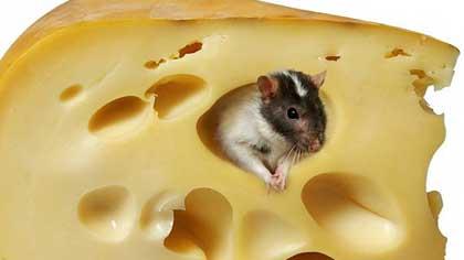 Кто проделывает характерные дырки в сыре