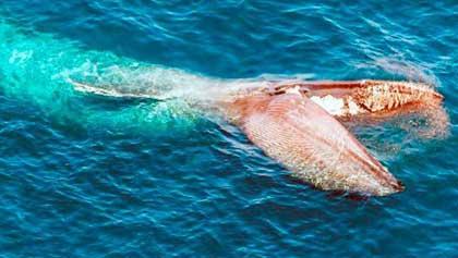 Мелочь, процеженная через китовый ус (8 букв)