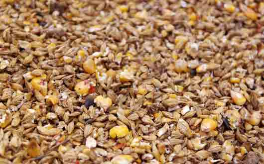 «Птичий корм» для сохранения дамской талии
