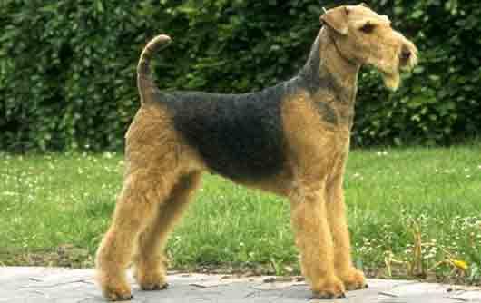 Какой породы была собака у Электроника