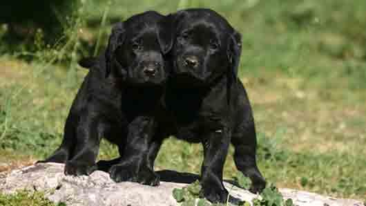 Любимая порода собак у Ванессы Паради