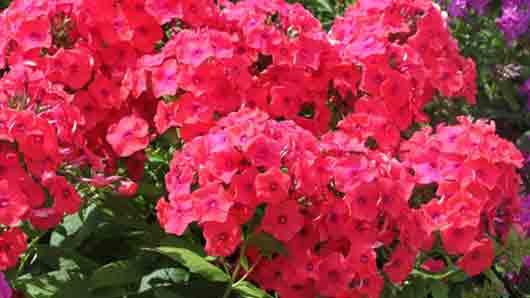 Цветок пламенной любви
