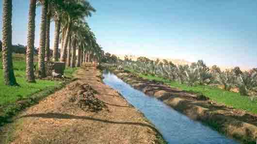 Какой зверь в Древнем Египте слыл главным вредителем полей