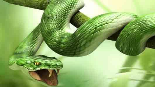 Сдача на милость зеленого змия