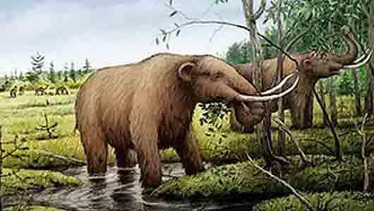 Слон из «Парка юрского периода»