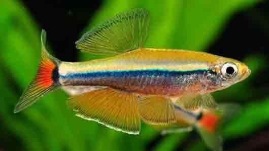 В каком океане плавает самая маленькая из известных морских рыб