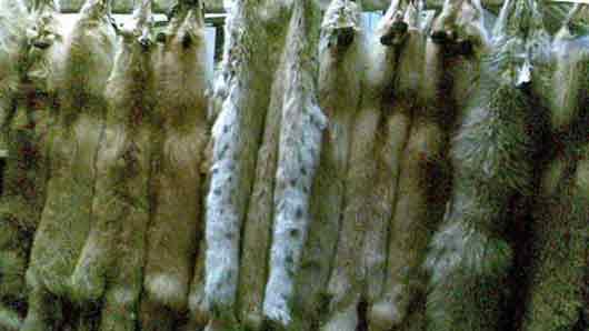Верхняя одежда из оленьих шкур