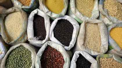 Какая зерновая культура самая урожайная в мире