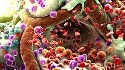 Препарат, выводящий токсины из организма