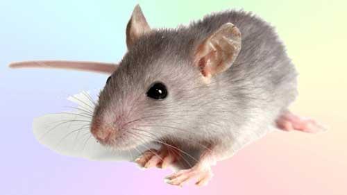 "Заурядность ""серой мышки"" (10 букв)"